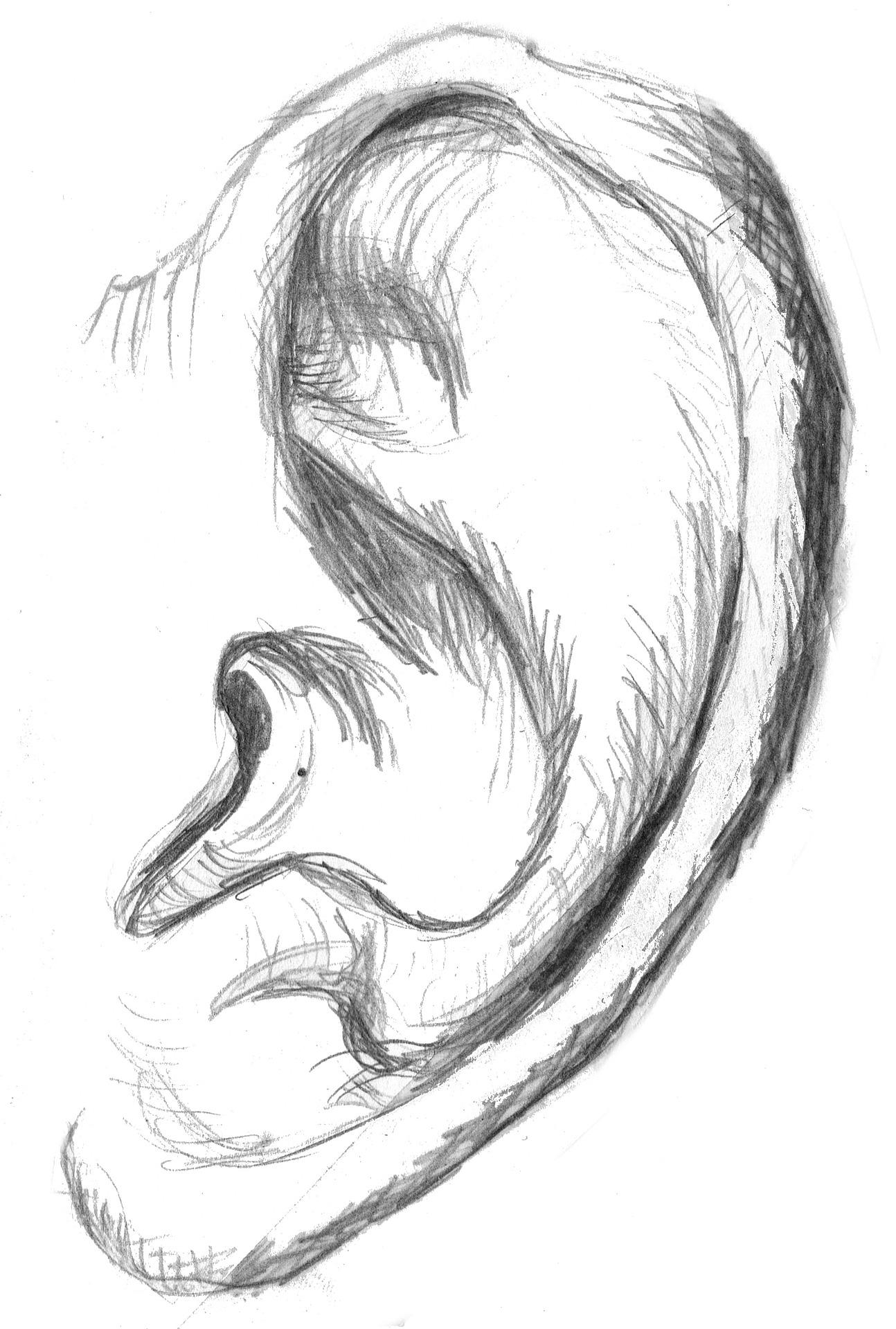 Das Ohr –